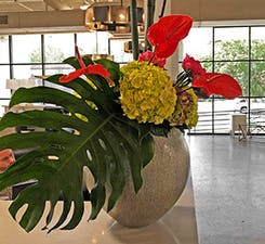 A potted plant with flowers atop a reception desk