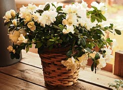 A lovely white floral arrangement on display in a basket