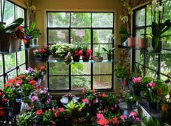 A wide range of bouquets, arrangements and plants on display in our sun room